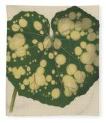 Farfugium Grande  Leopard Plant, Green Leopard Plant Fleece Blanket