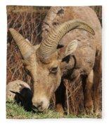 Feeding Time Fleece Blanket