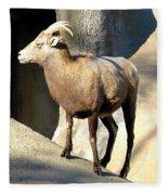 Female Bighorn Sheep Ewe Fleece Blanket
