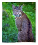 Female Bobcat Fleece Blanket