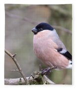 Female Bullfinch Fleece Blanket