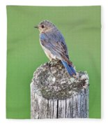 Female Eastern Bluebird 4479 Fleece Blanket