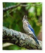 Female Eastern Bluebird Portrait Fleece Blanket
