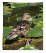 Female Mallard Among Lily Pads Fleece Blanket
