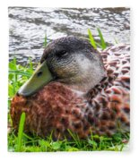 Female Mallard Duck Resting 4 Fleece Blanket