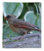 Female Northern Cardinal  Fleece Blanket