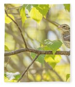 Female Rose-breasted Grosbeak Fleece Blanket