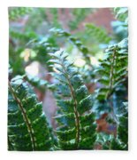 Fern Art Prints Green Sunlit Forest Ferns Giclee Baslee Troutman Fleece Blanket