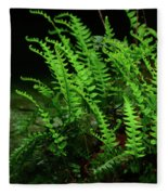Ferns On The West Virginia At Fleece Blanket