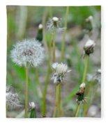Dandelions In Seed Fleece Blanket