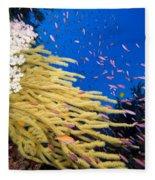 Fijian Reef Scene Fleece Blanket
