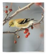 Finch Eyeing Seeds Fleece Blanket