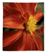 Fire Dahlia Fleece Blanket
