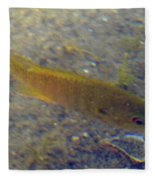 Fish Sandy Bottom Fleece Blanket