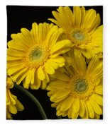 Five Gerbera Daisies Fleece Blanket