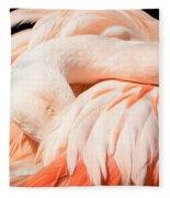 Flamingo Abstract Fleece Blanket