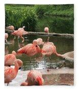 Flamingoes Looking Oh So Pretty  Fleece Blanket