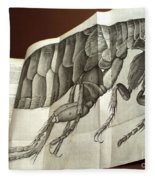 Flea From Robert Hookes Micrographia Fleece Blanket