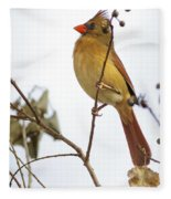 Florida Cardinal Fleece Blanket