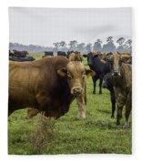 Florida Cracker Cows #2 Fleece Blanket