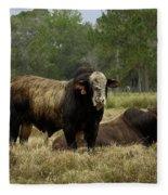 Florida Cracker Cows #4 Fleece Blanket