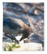 Florida Scrub Jay Breakfast Time Fleece Blanket
