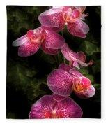 Flower - Orchid - Phalaenopsis - The Cluster Fleece Blanket
