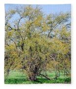 Flowering Huisache Tree  Fleece Blanket