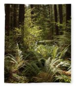 Forest Sunlight And Shadows  Fleece Blanket