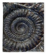 Fossil Ammonite - Dactylioceras Fleece Blanket