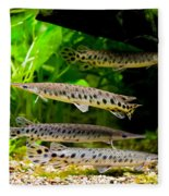 Four Aquarium Fishes In Zoo Fleece Blanket