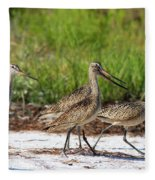 Four Marbled Godwits Fleece Blanket