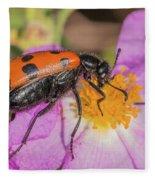 Four-spotted Blister Beetle - Mylabris Quadripunctata Fleece Blanket
