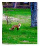 Fox Of Boulder County Fleece Blanket