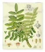 Frankincense Fleece Blanket