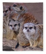 Freezing Meer Cats Fleece Blanket