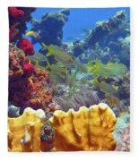 French Reef 1 Fleece Blanket