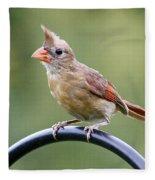 Friendly Female Cardinal  Fleece Blanket