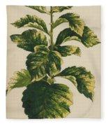 Frosted Thorn, Crataegus Prunifolia Variegata Fleece Blanket