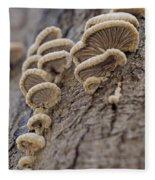 Fungui Growing On A Tree Trunk Fleece Blanket