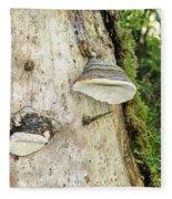 Fungus Grows On A Tree Trunk Fleece Blanket