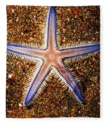 Galapagos Colorful Seastar Fleece Blanket