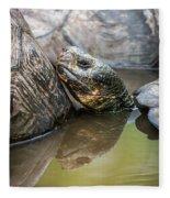 Galapagos Giant Tortoise In Pond Amongst Others Fleece Blanket