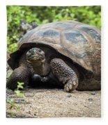 Galapagos Giant Tortoise Walking Down Gravel Path Fleece Blanket