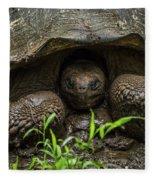 Galapagos Giant Tortoise With Head In Shell Fleece Blanket
