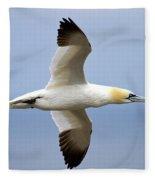 Gannet In Flight Fleece Blanket
