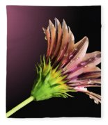 Gazania On Dark Background 2 Fleece Blanket