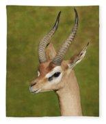 Gazelle Fleece Blanket