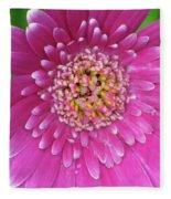 Gerber Daisy - Sweet Memories 01 Fleece Blanket