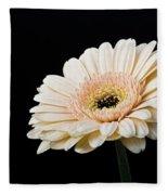 Gerbera Daisy On Black II Fleece Blanket